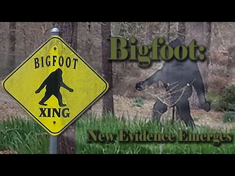 Is Bigfoot Real Or Fake:  New Evidence Emerges