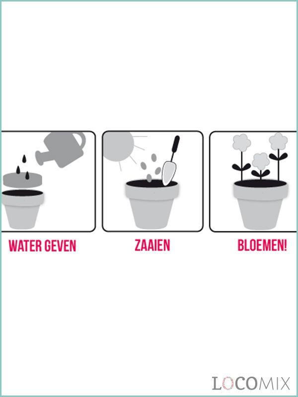 Een groen bedankje met bloemzaadjes kan zelfs door een familielid zonder groene vingers in leven worden gehouden! Planten, water geven en rustig afwachten totdat de bloemetjes uitkomen!