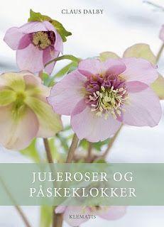 JULEROSER OG PÅSKEKLOKKER / HELLEBORUS