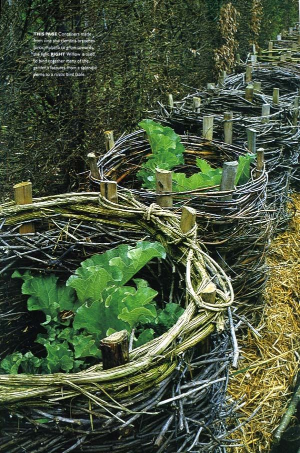 Rhubarb towers made from vine & clematis branches.
