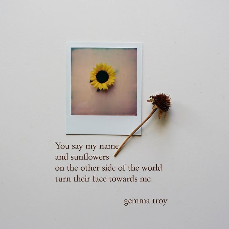 """325 Likes, 32 Comments - Gemma Troy Poetry (@gemmatroypoetry) on Instagram: """"*GIVEAWAY* I was asked if I could use a Polaroid again in one of my posts. I took this one today…"""""""