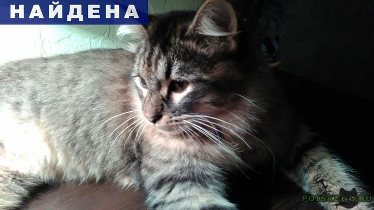 Найден кот г.Москва Кузя?