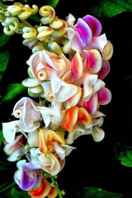 Reynolda Gardens - Most Beautiful Flower