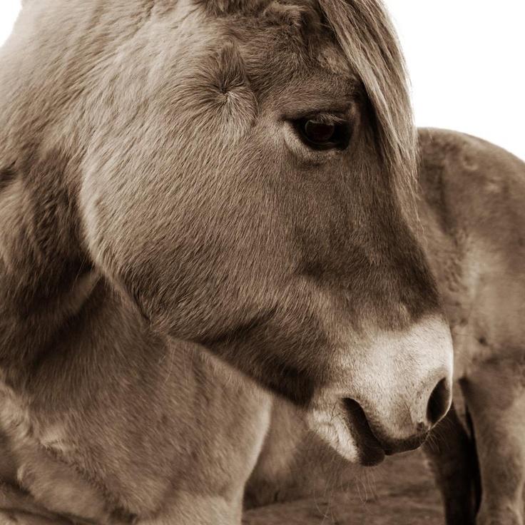 12 Best Casco Horse Riding Helmets Images On Pinterest