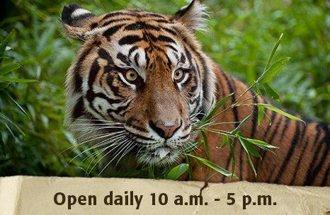 Are your trips to the zoo normally spent chasing the kids around? Ever thought of enjoying wildlife with your other half? It's easy with Komae! Get Komae, get free babysitting, and get out! www.mykomae.com #komaekids #akronzoo #datenight