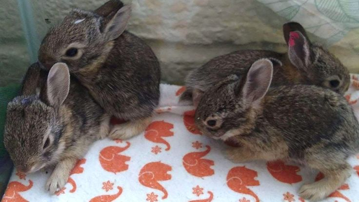 Tucson Wildlife Center Don't adopt a bunny this Easter