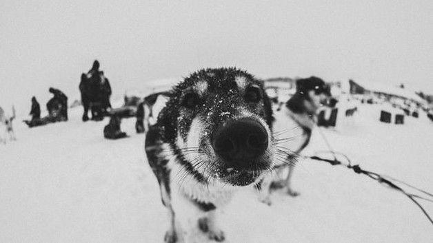 Per scoprirlo un dottorando di Standford ha passato un anno a Tromsø, la porta d'accesso al Polo Nord
