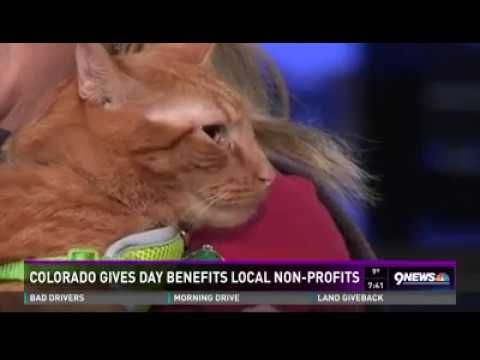 Siggy and Dahlia are famous! c;   Dahlia and Sigmund on Channel 9 News for Colorado Gives Day 2016 - YouTube