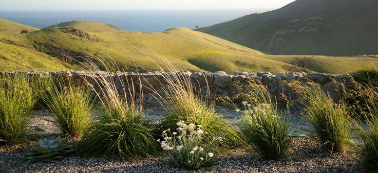 Grasses – yarrow – drought tolerant plantings – stone wall – rock wall – pure beauty!
