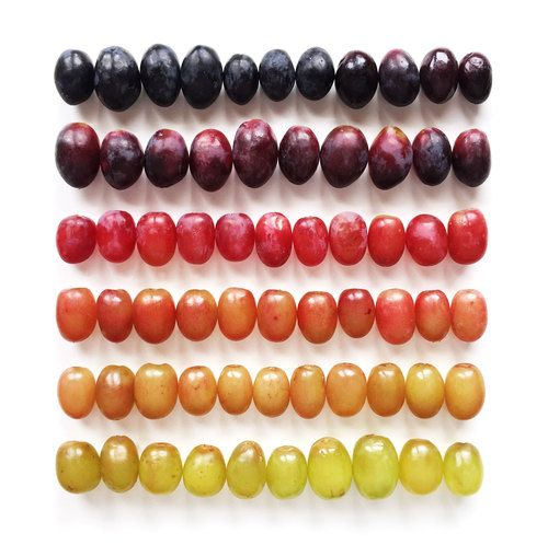 Brittany Wright Food Gradients7.jpg