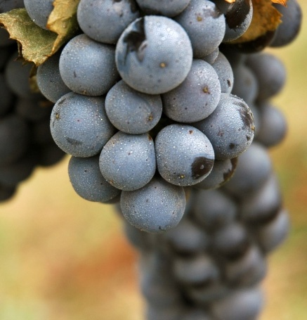 Learn about the wine-making process in #Chile #CasablancaValley