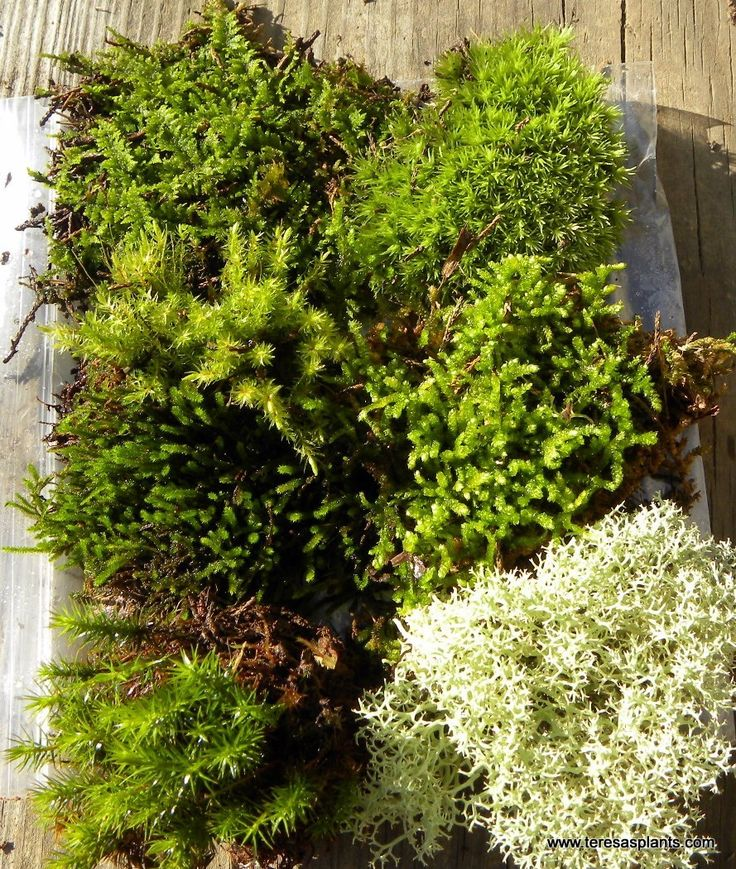 Not good with plants, preserved mosses used in architectural forms or to fill antique pots gives a low maintenance pop of nature.