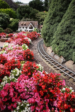 flowers and a small railroad