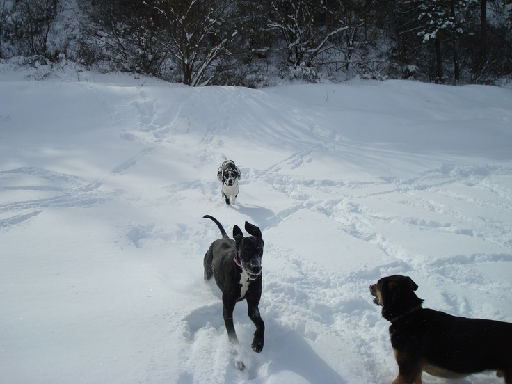Snow Fun With Great Dane Snow Fun Great Dane Dane