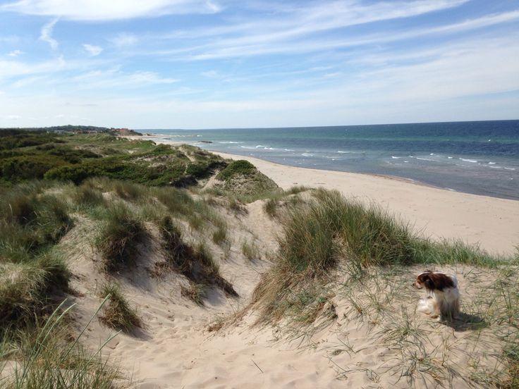 Beautiful Beach In liseleje, Denmark. My home..!