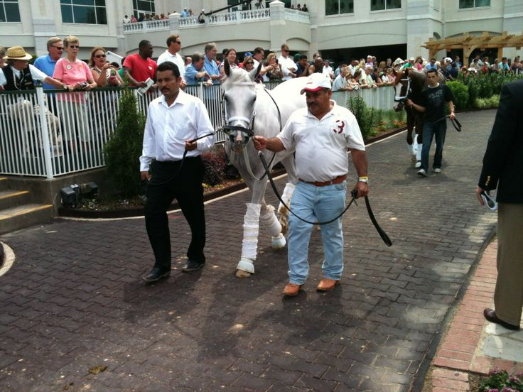 https://tuesdayshorse.wordpress.com/2012/05/03/white-horses-captivate-us-all-eyes-on-kentucky-derby-entry-hansen/  #Hansen schooling in the paddock May 3, 2012, at Churchill Downs. Image by Eric Kalet.