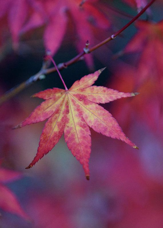 Enjoy the beautiful colors of autumn with fine art prints by Keith Boone.