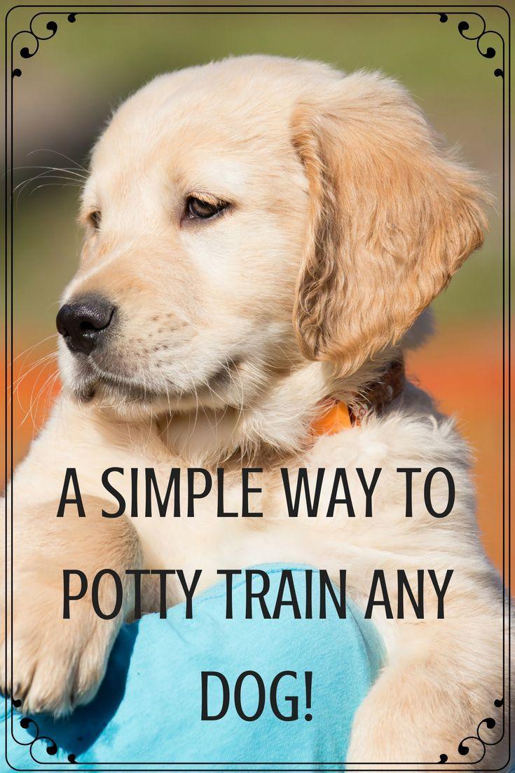 Dog Pottytraining Dogpotty Dogtraining Bells Canine Puppy