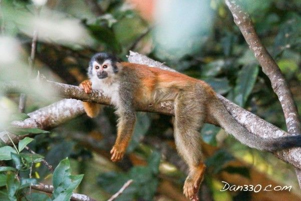 How I got outwitted by a monkey in Costa Rica http://livedan330.com/2015/12/10/how-outwitted-by-a-monkey/