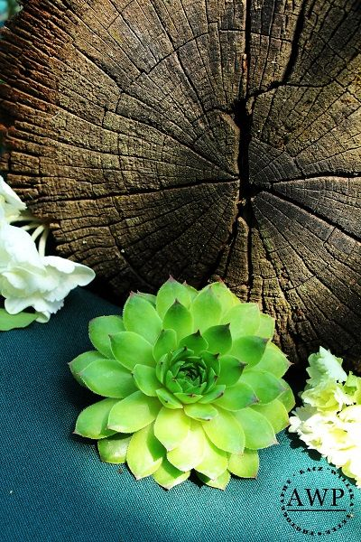 wood with succulent