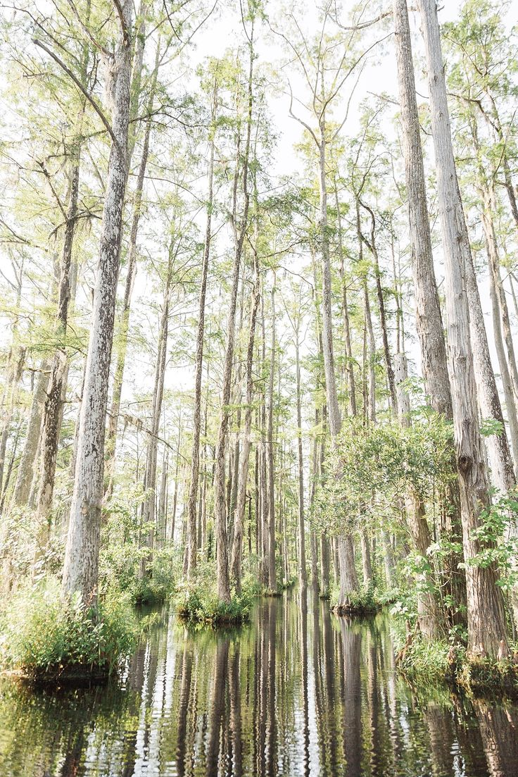Things to do in Charleston, SC: Cypress Gardens