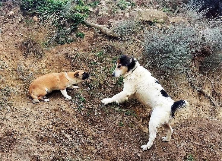 Rex & puppy
