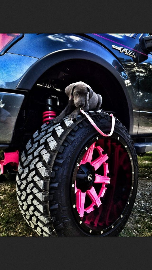 Pink wheels....hmmm. Don't think Troy would let me do that with the Black truck! Lol! But the puppy would be ok!! :)