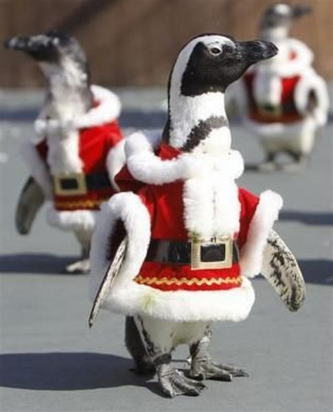 christmas penguins THE BEST THING EVER!!!