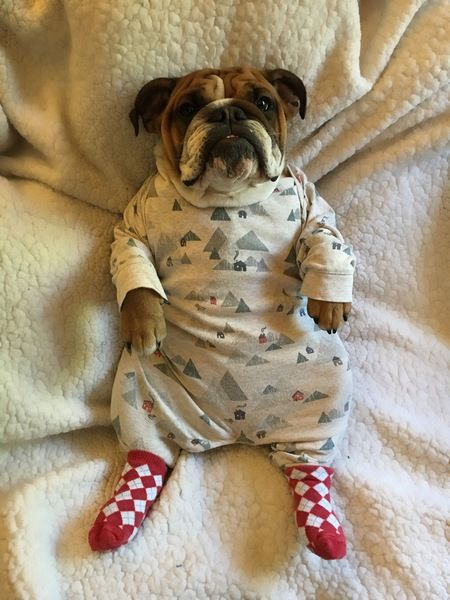 Show your support for Southern California Bulldog Rescue by voting for Clementine in the No Bulldog Left Behind