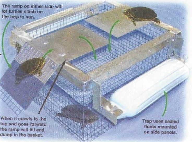 Floating Turtle Trap: A high quality sunbathing turtle trap with an aluminum frame that ensnares turtles as they try to sun themselves. This sturdy trap stays afloat by using watertight floats mounted on both sides of the trap. Once deployed, turtles will walk onto the ramp and then fall into the escape proof cage. The water tight vinyl floats along with the rust resistant frame enable the trap to stay afloat longer and can endure greater duress than other brands.
