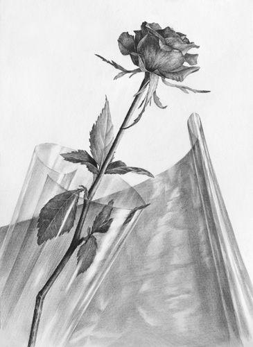 달동네 그림연구실 :: [정물소묘/구성] 장미, 셀로판지 과정작