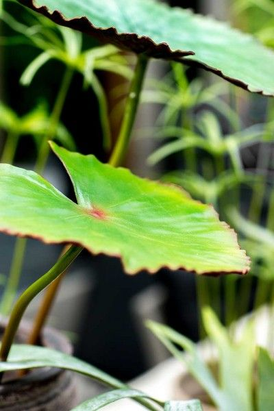 Natural Green Collection - Silk-ka