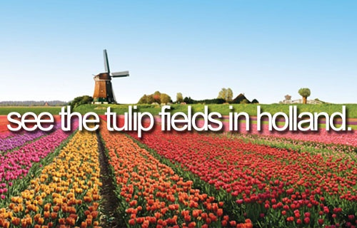 See the tulip fields in Holland - The yearly tulip festival starts about 100 meters from our home so we go visit it every year. It's about 100 kilometers long and each village has its own tulip mosaic. We also always take some pictures of our dogs in/nearby the fields. I'm not that into the most cultural stuff but I do love that part of living here.