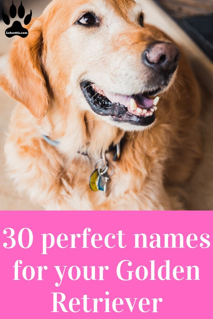 300 Girl Dog Names A Z Girl Dog Names Girl And Dog Dog Names