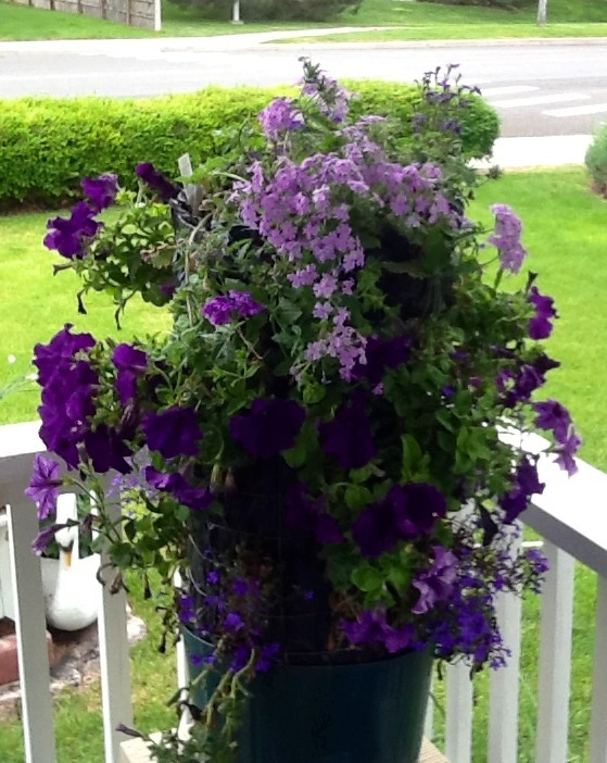this is my flower tower I put petunias and verbinias.