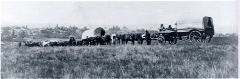 Transport-riding, the usual means of moving produce before coming of railways, provided a livelihood for many colonists. Here wagons are moving down the Town Hill towards the city. From: http://www.pmbhistory.co.za/?showcontent%5B_id%5D=93
