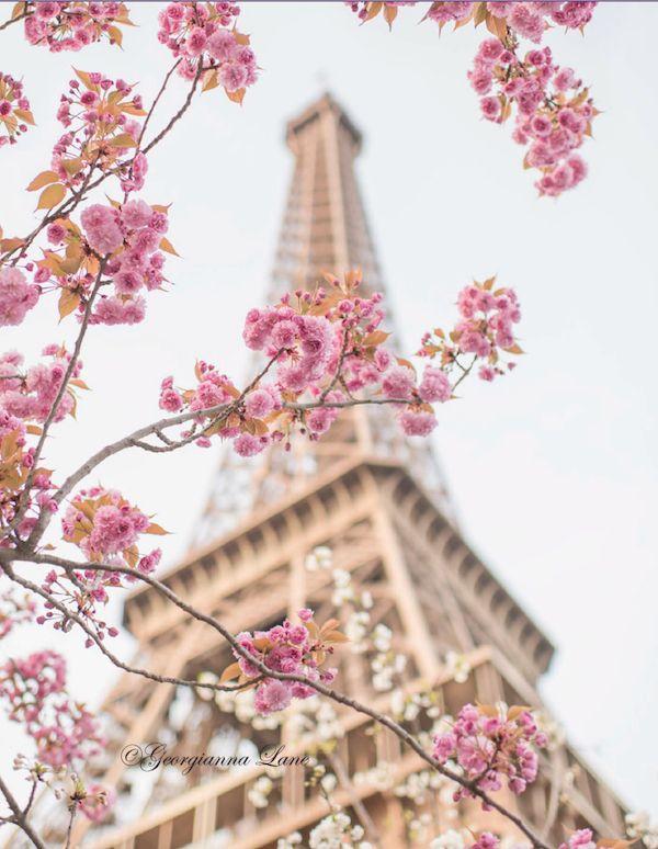 paris in bloom by georgianna lane