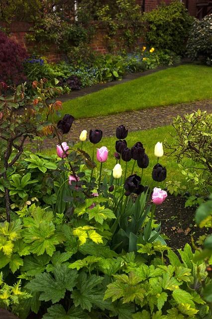 Oxford: Gardens Flowers, Dark Tulips, Gardens Ii, Beautiful Flowers, Fun Landscapes, Landscape Ideas, Beautiful Tulips