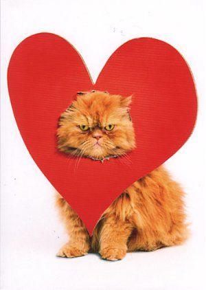 happy valentines dayincludes envelope - Cat Valentines Day