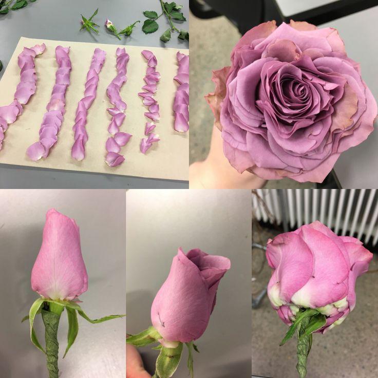 Glamelia, rose