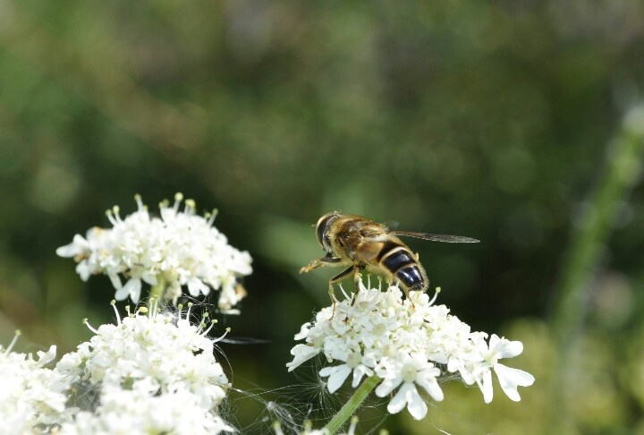 Nature photography - Insects