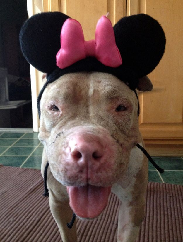 Such a touching story about Cadence, a rescued bait dog who has been rehabilitated and is now available for adoption!