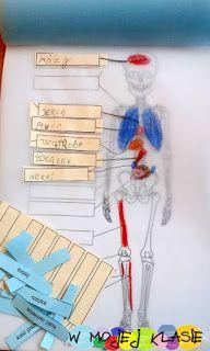 Zamiast kserówki. Edukacyjne gry i zabawy dla dzieci.: Ciało człowieka