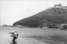François Le Diascorn. Boy swimming with a pelican. Astypalaea island Greece. https://francoislediascorn-us.com/portfolios