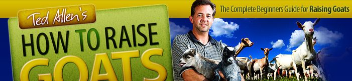 How to Build a Goat House - 5 Easy Tips To Consider Before Putting Up Your Own Goat Farm