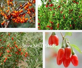 Garden Plant Goji Berry Chinese Wolfberry  Seeds Herbs Seed Potted plants home garden outdoor house plants 200pcs Bonsai Seed