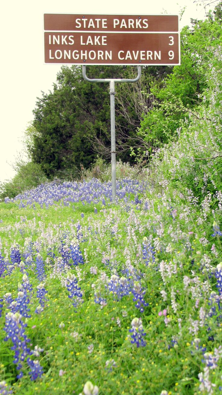 1000 Images About Bluebonnet Amp Wildflowers The Highland