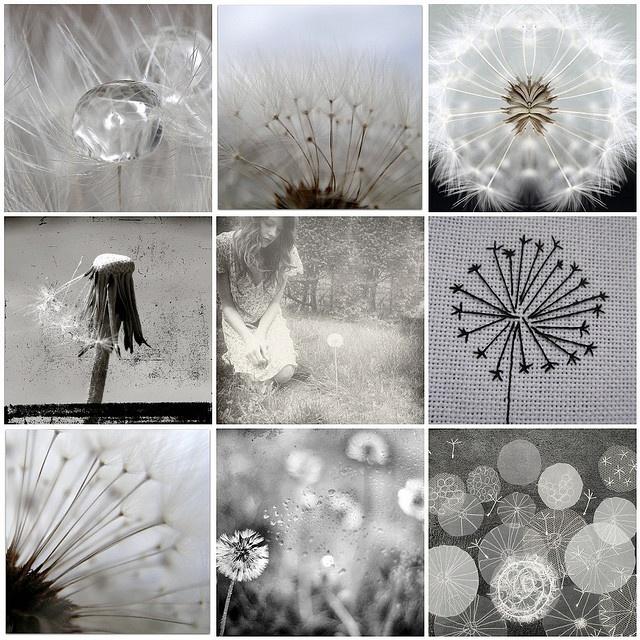 Photo Mosaic - Dandelion puffs