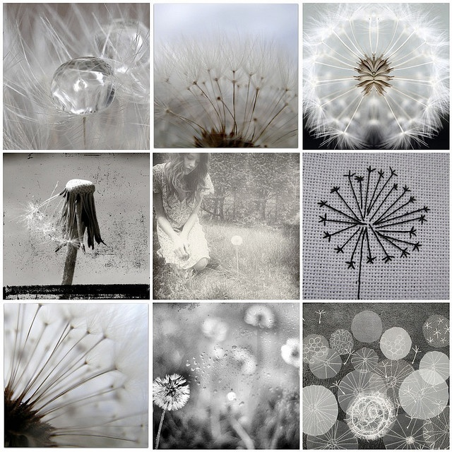 Photo Mosaic - Dandelion puffs
