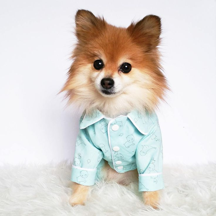 Dog pajamas, puppy shirts, puppy pjs shirt, dog onesie, dogs jammies, baby pet clothes, doggy shirts, dog clothes, puppy bed, dog pajamas by puppydoggyclothes on Etsy